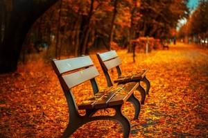 pixabay_bench-560435_640